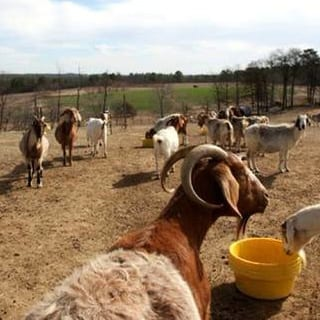 Hot Shot Goats Bring Hope to One Farmer