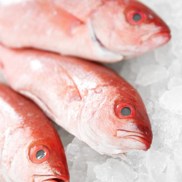 6 Tips for Picking Fresh Fish