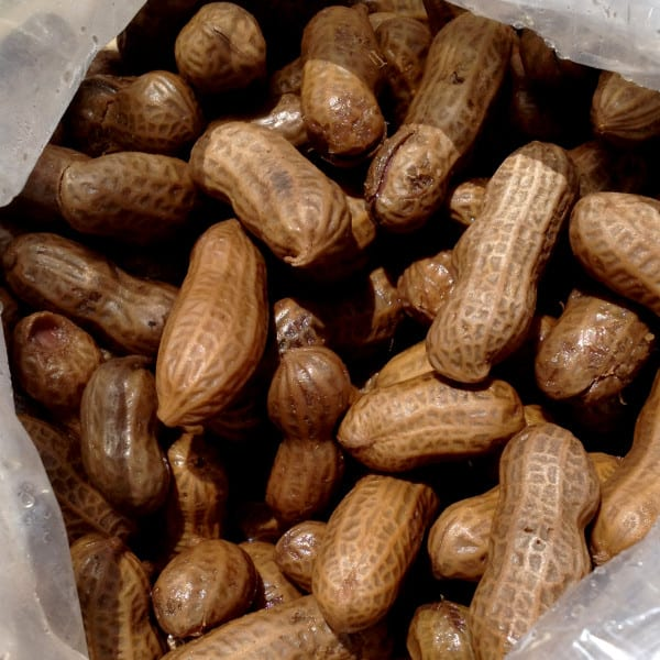 I Brake for Boiled Peanuts