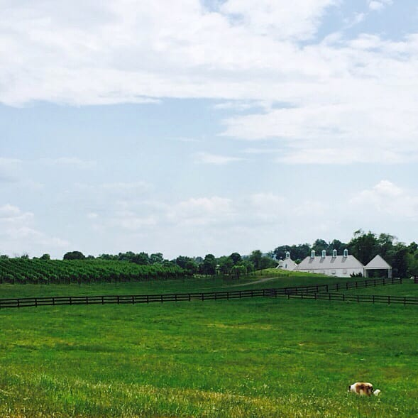 Road Trip:  Exploring the Virginia Countryside