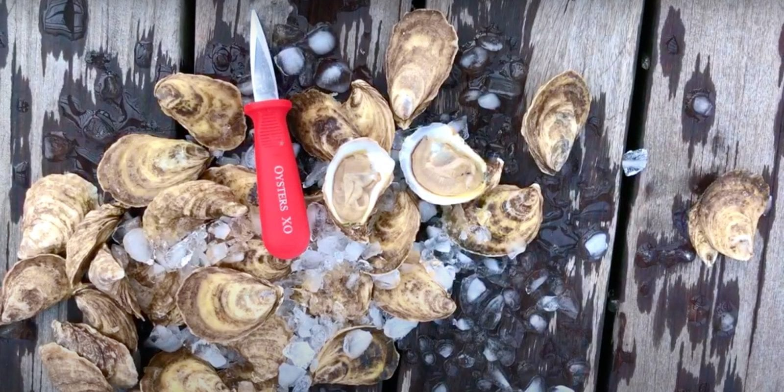 Shucking At Home<br> with Oysters XO